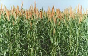 biogene-66